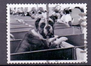 Great Britain 2001 used cats and dogs 1st boxer at dog show   #