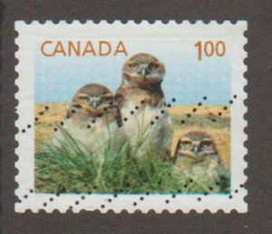 2710  Burrowing Owl