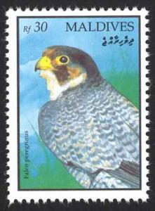 Maldive Islands Sc# 1634 MNH 1993 30r Falco Peregrinus