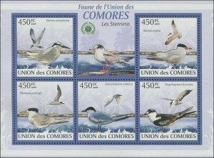 Comoro Island 2009 MI 2397-2401 Birds Gulls CV $11.50