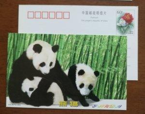 Giant Panda,bamboo forest,China 2000 rare & precious animal advertising PSC