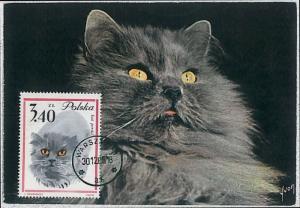 32489   MAXIMUM CARD - Animals CATS CAT : POLAND 1965