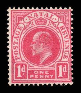 Natal 1904 EDVII 1d wmk MCCA SG 147 mint