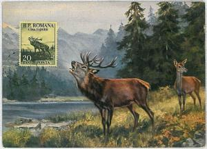 MAXIMUM CARD - POSTAL HISTORY -  Hungary: Deers, Hunting, Fauna