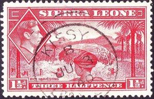 SIERRA LEONE 1938 KGVI 1½d Scarlet SG190 Used