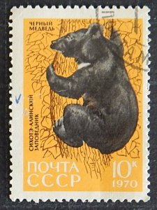 Animals, Black bear, Sikhote Alin Reserve, 1970, (1210-Т)