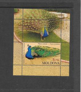 BIRDS - MOLDOVA #788 PEACOCK  MNH