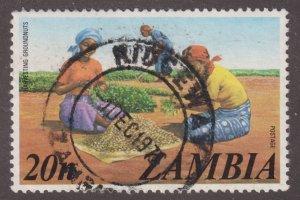 Zambia 144 Peanut Harvest 1975