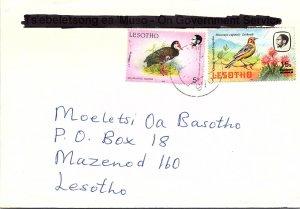 Lesotho, Birds
