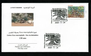 2020- Tunisia - Tree The Ficus Macrophylla at Belvedere Park- 130 years - FDC