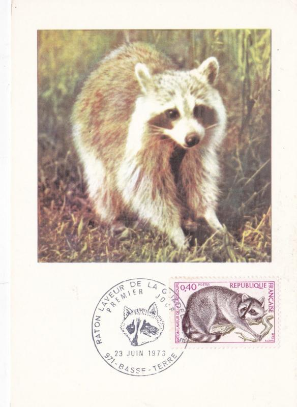 France 1973 Raccoon of Guadeloupe Maxim Card FDC Unused VGC