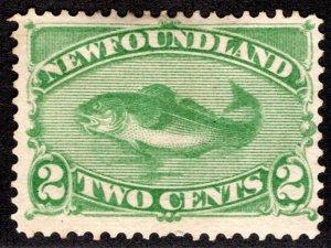 43, NSSC, Newfoundland, 2c, green, Codfish, MNG, F