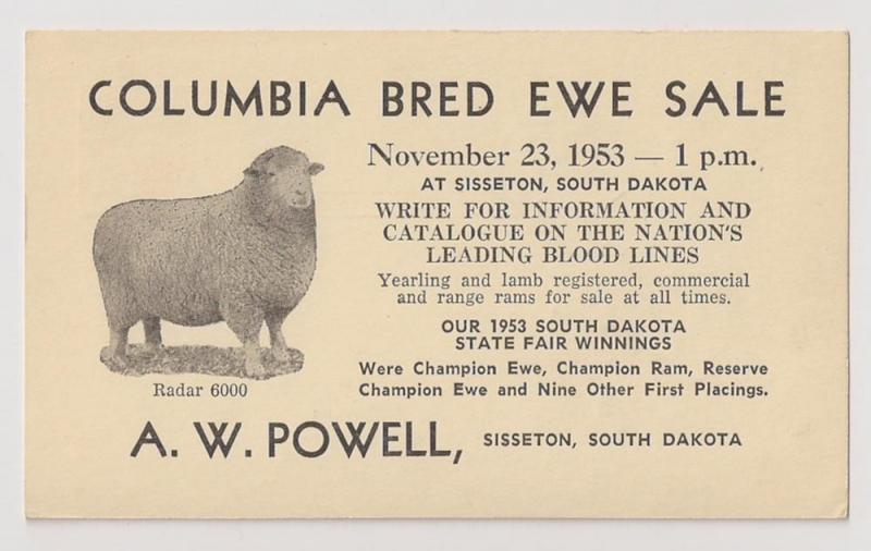 2c UX38 used w EWE SALE announcement PHOTO of sheep