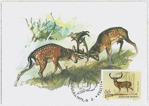 MAXIMUM CARD - POSTAL HISTORY -  Hungary: Deer, Hunting, Fauna, 1971