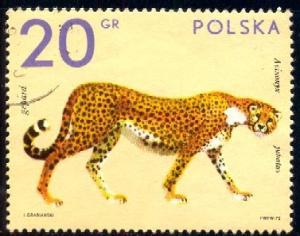 Cheetah, Zoo Animal, Poland stamp SC#1888 used