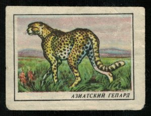 Asiatic cheetah, Matchbox Label Stamp (ST-126)