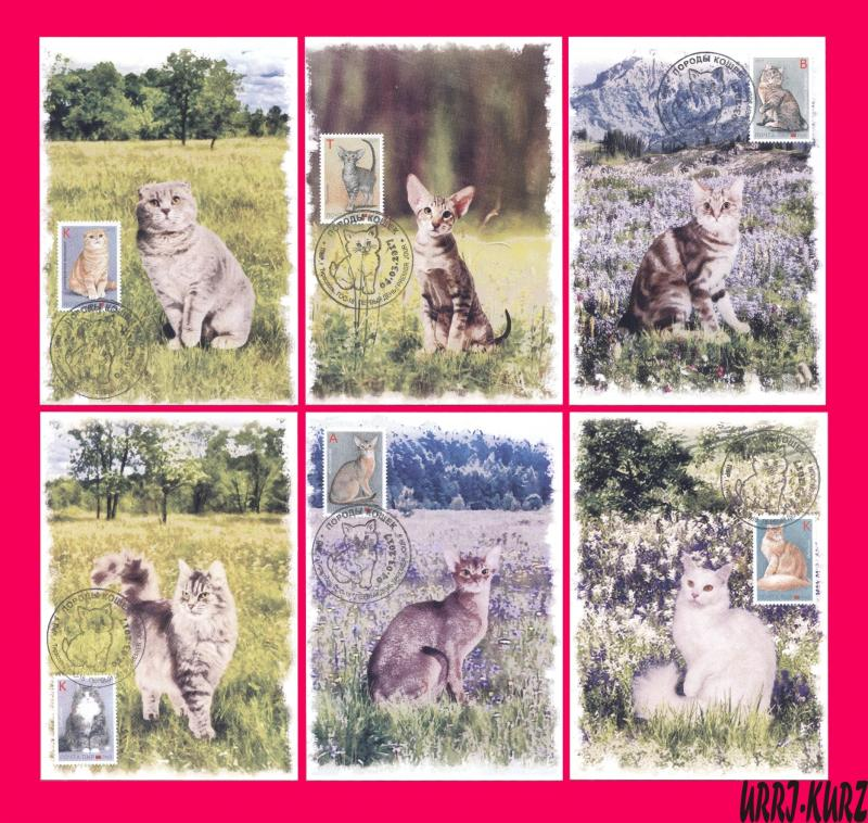 TRANSNISTRIA 2017 Nature Fauna Farm Domestic Animals Pets Cats 6 MaxiCards
