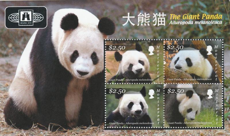 MONTSERRAT  GIANT PANDA