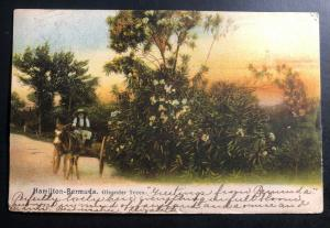 1909 Bermuda Picture Postcard Cover To Marblehead MA USA Oleander Trees