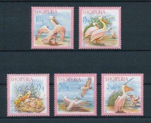 [102924] Albania 1967 Birds vögel oiseaux pelicans  MNH