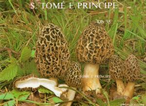 Sao Tome and Principe 1987 Mi#Bl.173 MUSHROOMS/PILZE S/S IMPERF.MNH