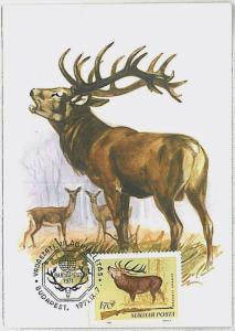 MAXIMUM CARD - POSTAL HISTORY -  Hungary: Deers, Hunting, Fauna, 1971