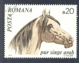 Arabian Horse (Equus ferus caballus). 1970 Romania, Scott #2209. Free WW S/H