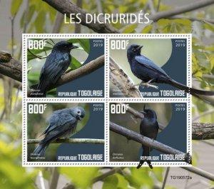 TOGO - 2019 - Birds : Drongos - Perf 4v Sheet - M N H