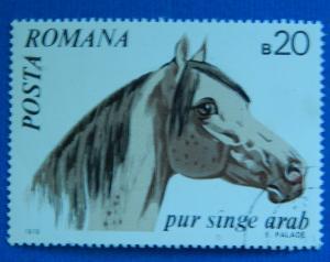 Horse, 1970, Europ, Romania, №58-T-1