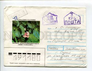 413467 UKRAINE Begonia continuously blossoming Pink Camellia Striy Provisional