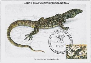 MAXIMU CARD - Fauna REPTILES : French Equatorial Africa 1955 Afrique équatoriale