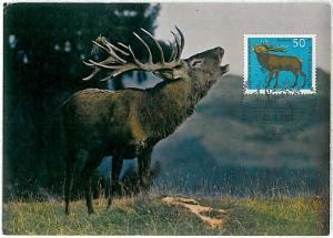 32187  MAXIMUM CARD - POSTAL HISTORY - Germany: Deers, Moose, Hunting, 1966