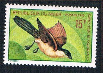 Niger 235 MLH Senegalese Coucal (BP10022)