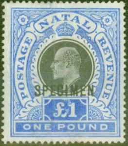 Natal 1902 £1 Black & Brt Blue Specimen SG142s Ave Mtd Mint