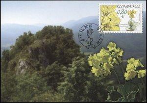 Slovakia. 2010. Muranska Plain - Primula Auricula (Mint) Maximum Card