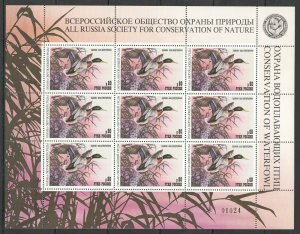 EC246 1998 RUSSIA FAUNA BIRDS DUCKS CONSERVATION OF WATERFOWL NATURE 1SH MNH