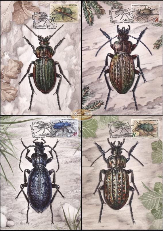 Belarus. 2016. Insects - Ground Beetles (Maxi Cards Set, M)