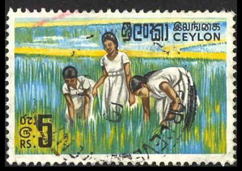 Ceylon Sc# 379A Used (a) 1969 Girls in Rice Field