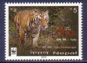 2010 Nepal 998 WWF / Cats