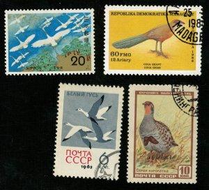 Birds, (3291-T)