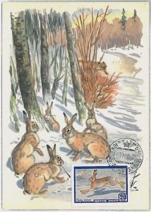 32215  MAXIMUM CARD - POSTAL HISTORY - Russia USSR: Hares,   Rabits, 1960