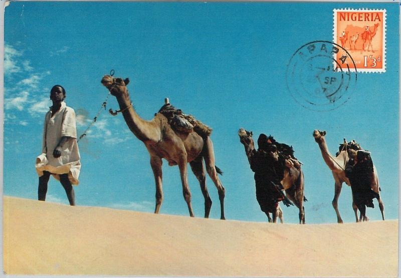 59104  -  NIGERIA  - POSTAL HISTORY: MAXIMUM CARD 1967  -  ANIMALS Camels