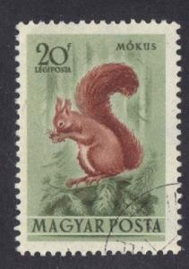 Hungary  1953  used Air forest animals 20fi. Red squirrel  #