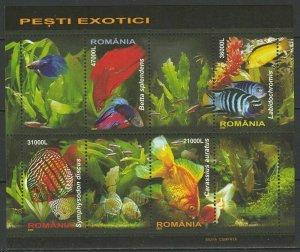 Rumänien 2005 Fische Postfrisch
