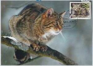 63834 - SWITZERLAND - POSTAL HISTORY: MAXIMUM CARD 2011 -  CATS