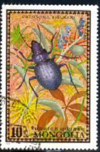 Insect, Bug, Calosoma fischeri, Mongolia SC#667 used