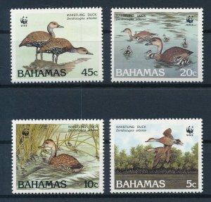 [I648] Bahamas WWF Birds good set of stamps very fine MNH