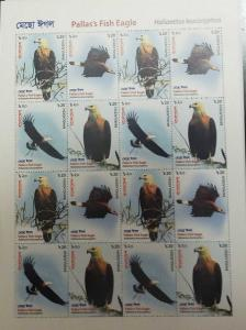 O) 2018 BANGLADESH, BIRDS OF PREY, HALIAEETUS LEUCORYPHUS -PALLAS´S FISH EAGLE,