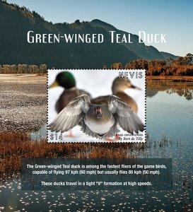 2021/01 - NEVIS - GREEN WINGED TEAL DUC             1V  complet set    MNH ** T