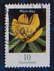 Flower, Germany, (2586-Т)